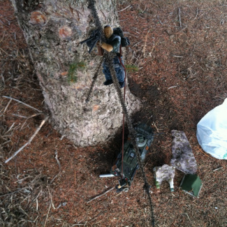 Image of: Tree rappelling