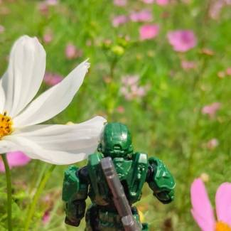 Image of: Spartans and Flowers