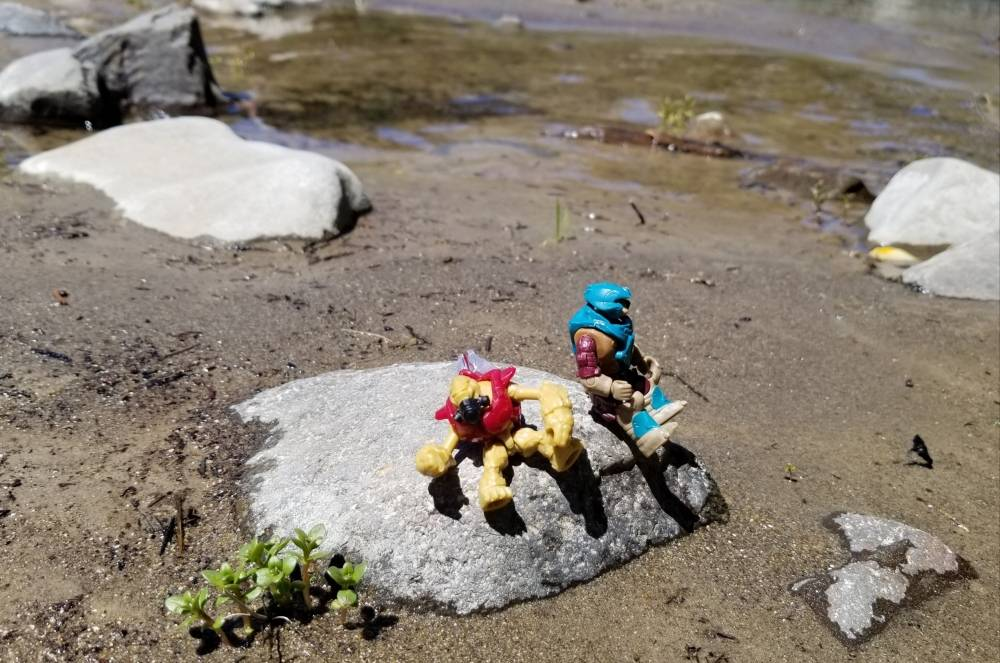 Image of: The covenant's beach day