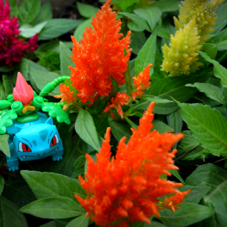 Image of: IVYSAUR