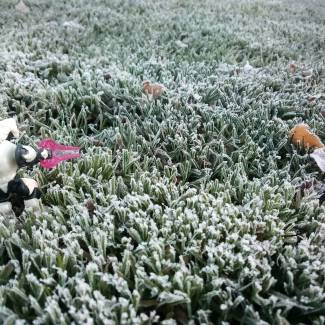 Image of: Cold frosty morning