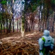 Edited Marine in The Forest