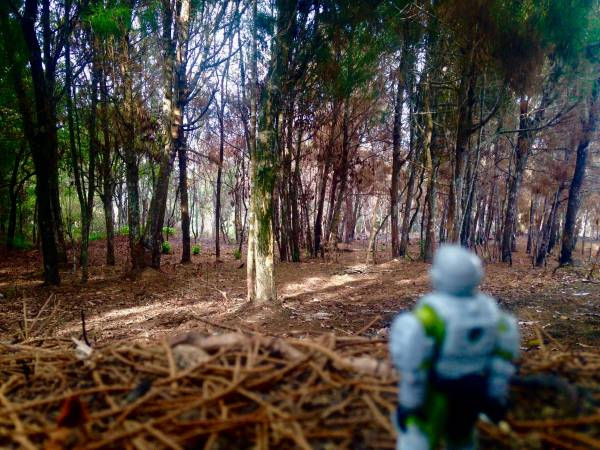 edited-marine-in-the-forest
