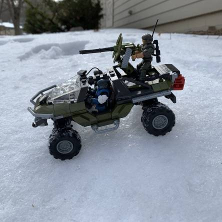 Warthog in the snow